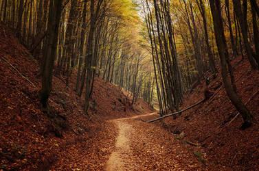 Autumn Walk LXXV. by realityDream