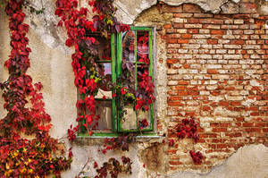 Autumn Window II. by realityDream