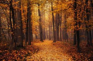 Autumn Walk LXXXIV. by realityDream