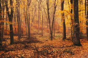 Fall Impressions IX. by realityDream