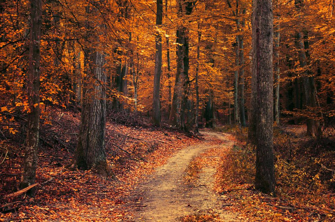 Autumn Walk LXXX. by realityDream