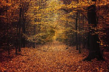 Fall Mood I. by realityDream