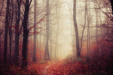 Fading Autumn XII. by realityDream