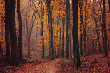 Fall Impressions VIII. by realityDream