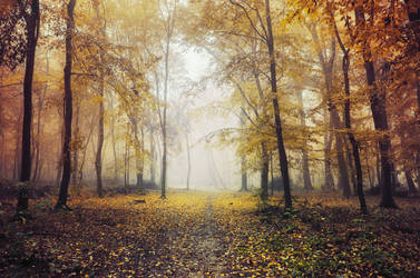 Autumn Walk XCIX. by realityDream