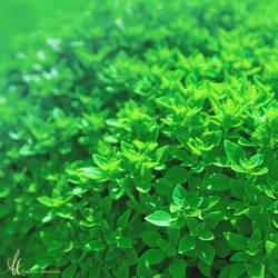 Infinitely Green by Nehym