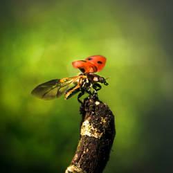 Ladybird by Nijn88