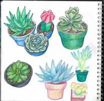 Cactus and succulents by Erratum27
