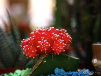 Kaktus by rianpratama