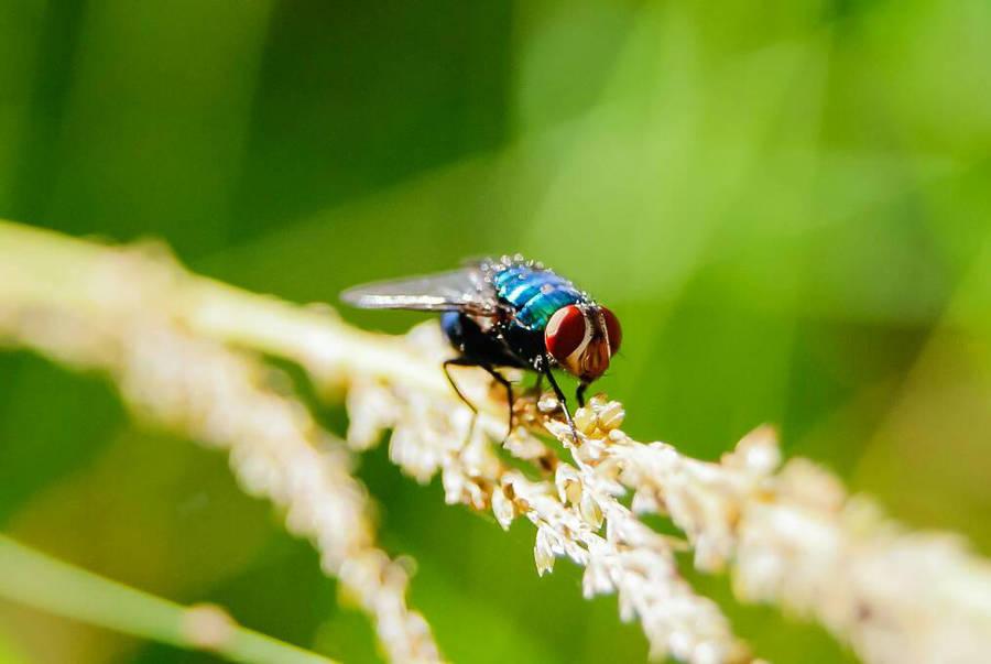 na distrao, at um nome daria a um inseto by 1drelopes