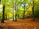 Autumnal Woods by nimroderriver