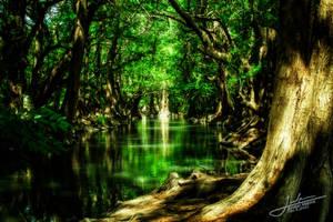 Deep forest by Jmalpica