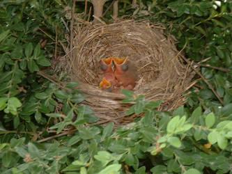 Baby Birds by subgeek