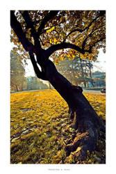 Twisted Tree by phobyte