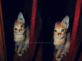 kitten. by kathero3
