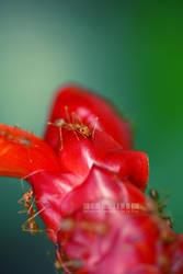 luscious red by kathero3