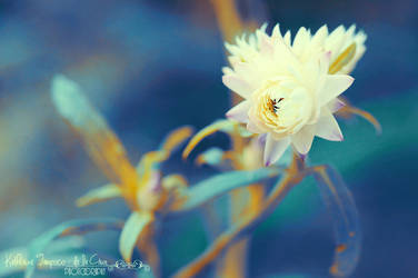 White Summer by kathero3