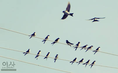 House Martins by IsabellaBLK