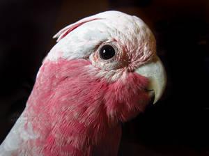 Pink by Sapphiresenthiss