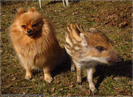 A Dog and a Boar by Sapphiresenthiss