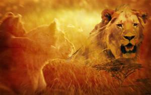 Lion wallpaper by GerryPhantom