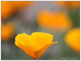 Yellow by hollygalah