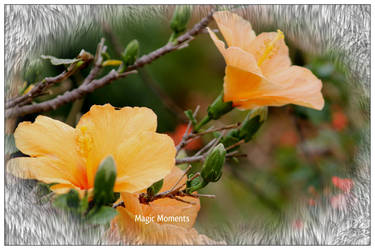 Hibiscus 2 by hollygalah