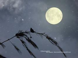 August Moon by BlackJack0919