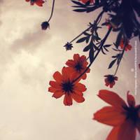 Fly To The Sky by BlackJack0919