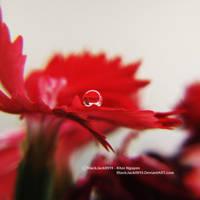 The Power Of Stillness by BlackJack0919