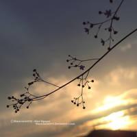Distant Sun by BlackJack0919