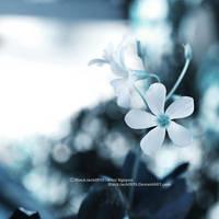 In Living Dreams by BlackJack0919