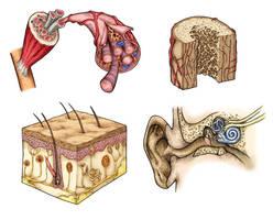 Human biology by mirelai
