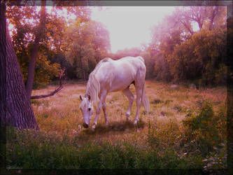 Morning Graze by StereophonicDream