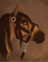 Buckskin horse by StereophonicDream