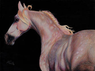 Rose Grey Arabian Horse by StereophonicDream