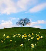Spring 63941 by Aspen-ness