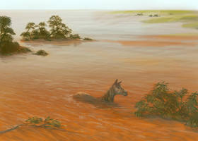 Flood waters by redwattlebird