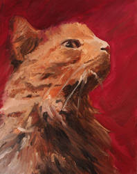 Bailey the cat by Shinagara