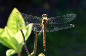 Dragonfly 3 by YunaAnnPhotography