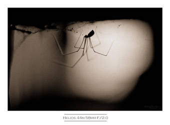 Daddy Long Legs by istarlome