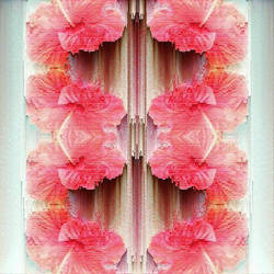 Hibiscus Pixel Sort by ScarlettCatson
