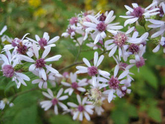 Tiny wildflowers by larissa-stock