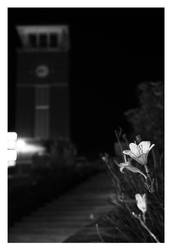 Flower in the Night by jcarkeys