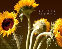 kansas blooms by shaladesigns
