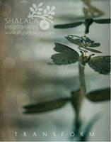 transform by shaladesigns