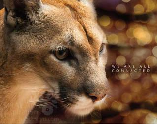 cougar by shaladesigns