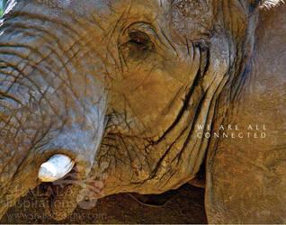 elephant by shaladesigns