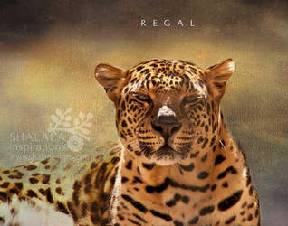 regal by shaladesigns