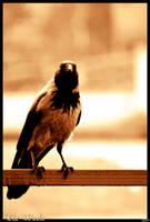 Nice Bird by scorsagra